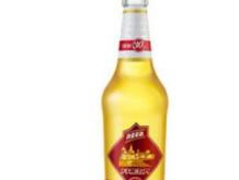 力波鲜酿啤酒320ml